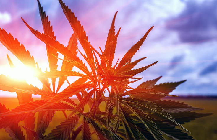 PODCAST – Wednesday, June 9: Legal Marijuana Hits A Snag; Tribe Big Family Stories; Movies So Bad You Walked Out