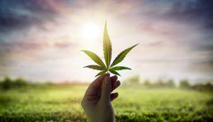 Hand Holding Cannabis Leaf Against Sky With Sunlight