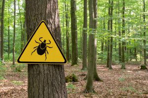 """Warning sign """"beware of ticks"""" in infested area in the green forest"""