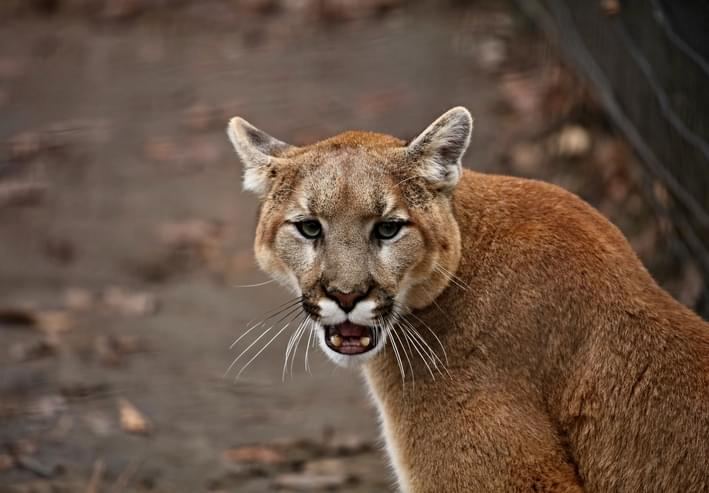 PODCAST – Monday, October 19: Scary Stories; The Viral Video Guy Who Was Stalked By A Cougar; Court Audio Returns