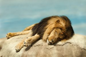 Tired King