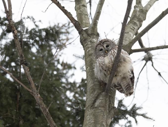 PODCAST – Wednesday, February 3: A 911 Call About An Owl; Dumb Ass News; We Check In With A Celebrity Sex Therapist