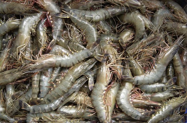 PODCAST – Tuesday, March 30: Tribe Nicknames; Naugatuck Shrimp Thieves; When To Eat Roadkill