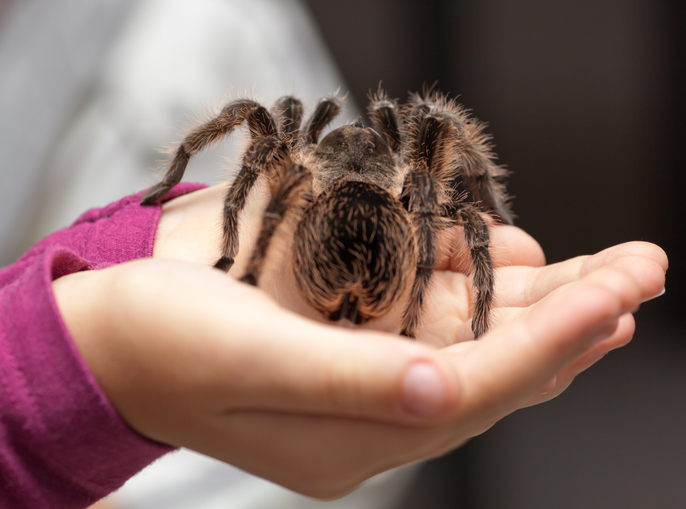"""PODCAST – Wednesday, September 29: Chaz And AJ Play """"Where's The Emergency?""""; Dad Goes Viral While Baby Plays With Tarantula; Favorite Movie Villains"""