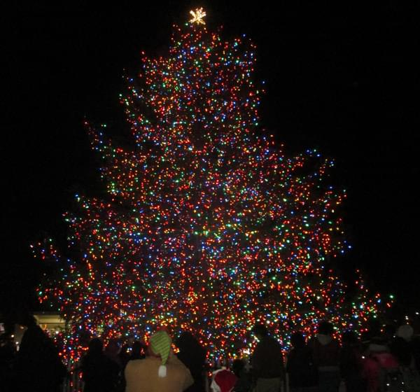 New Haven Holiday Tree Lighting
