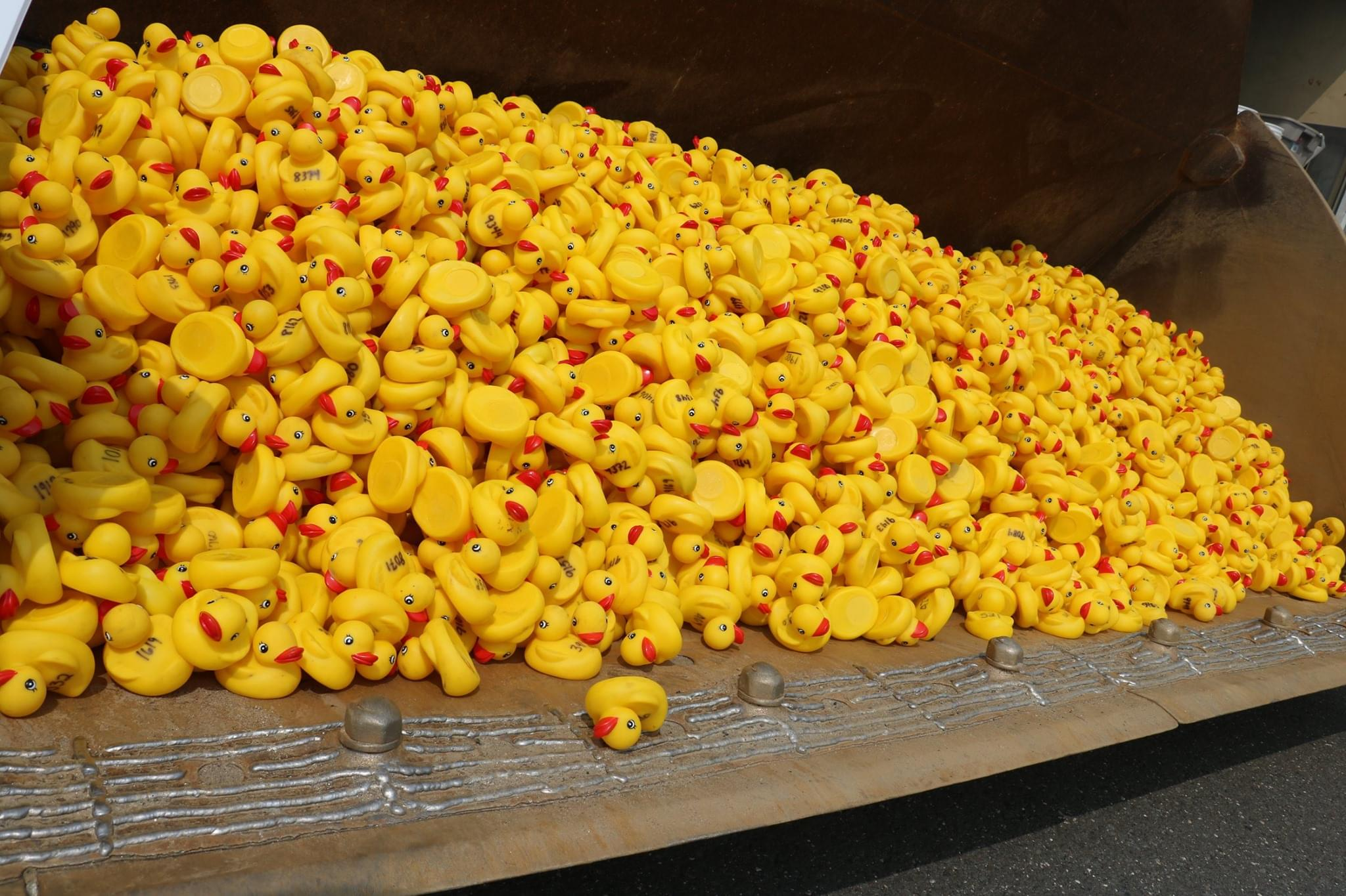 United Way Milford Harbor Duck Race Photos