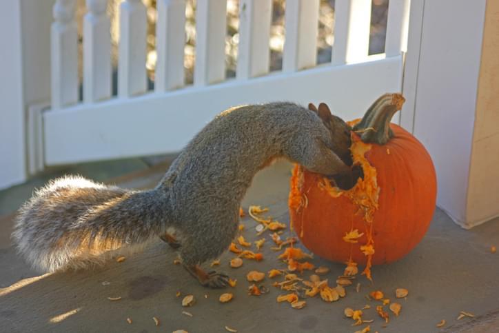 WEBE Morning Hack! Fri Oct 18, 2019 Pumpkins and Squirrels