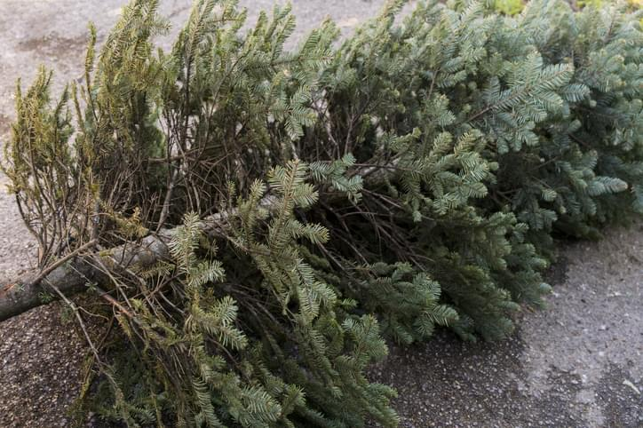 Morning Hack 1/2/20 Tossing your tree cleanly!