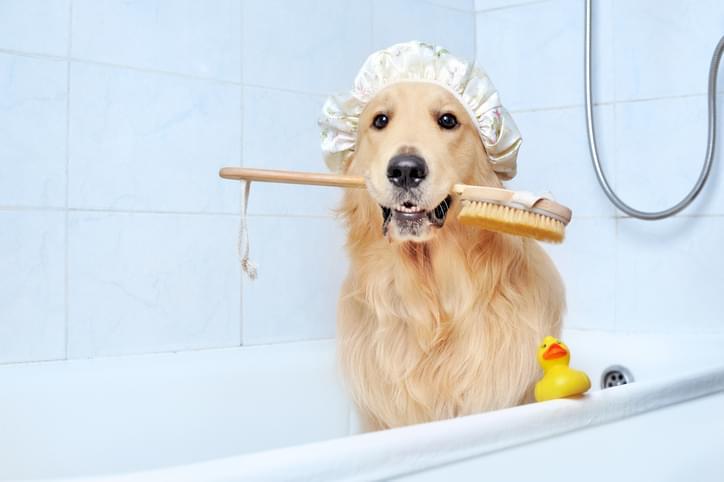 Morning Hack 3/12/2020 Best Dog Bath Hack Ever!
