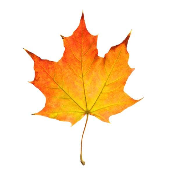 Morning Hack 11/9/2020 Preserve A Leaf!