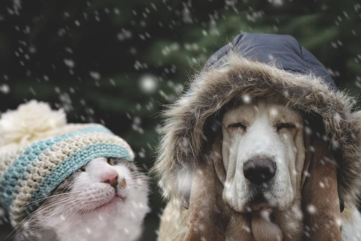 Cat and dog in winter cap