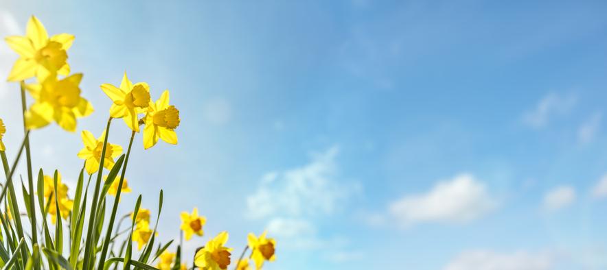 WEBE Wellness: Spring Has Sprung!