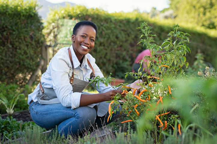 WEBE Wellness: Gardening For Your Mental Health