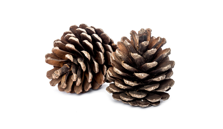 Morning Hack 9/14/2021 Scented Pine Cones Made Easy!