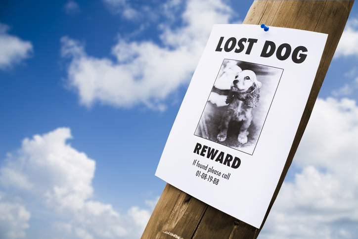 Morning Hack 9/28/2021 This Might Help Finding A Lost Dog Or Cat