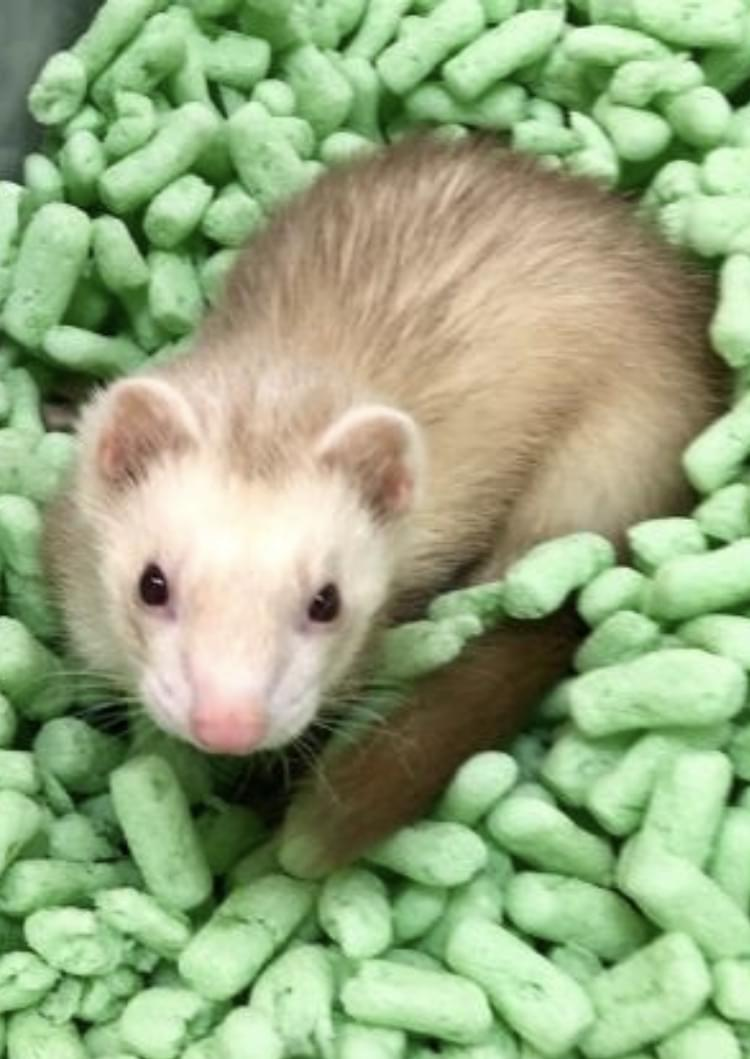 Pet of the Week: Kevin