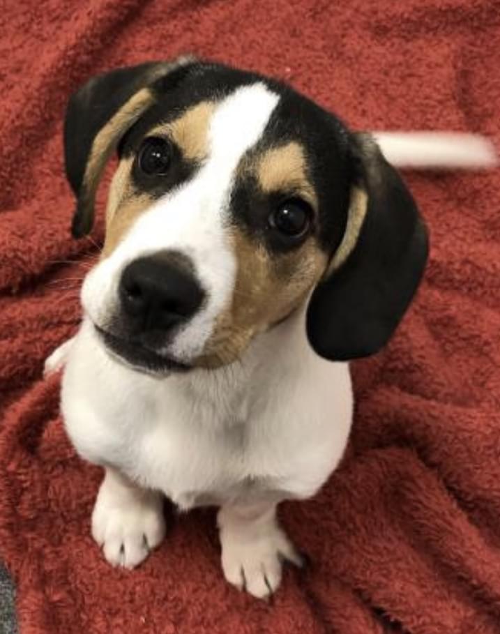 Pet of the Week: Spot