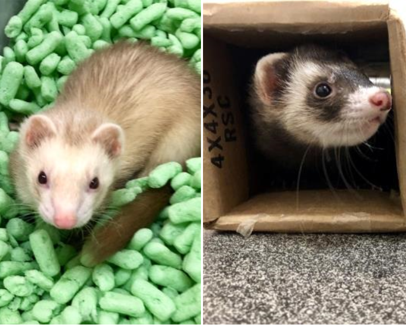 Pet of the Week: Kevin and Fabian