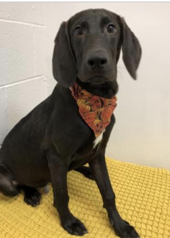 Pet of the Week: Virgil