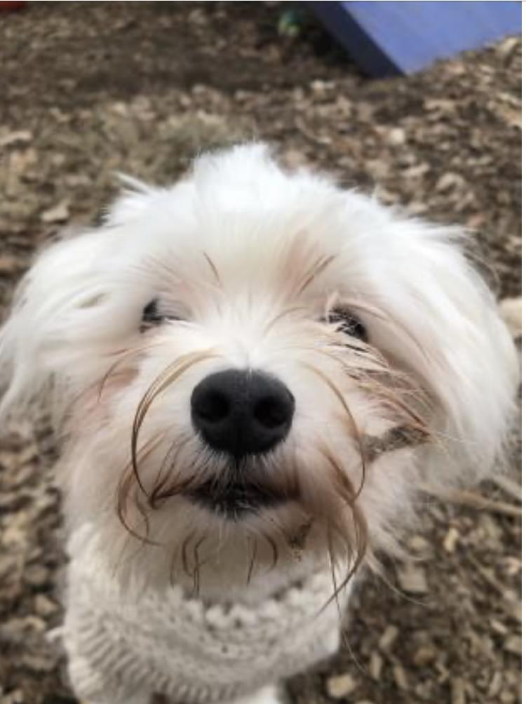 Pet of the Week: Yuki