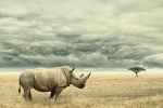Tony & Melissa: Pandemic means more poaching