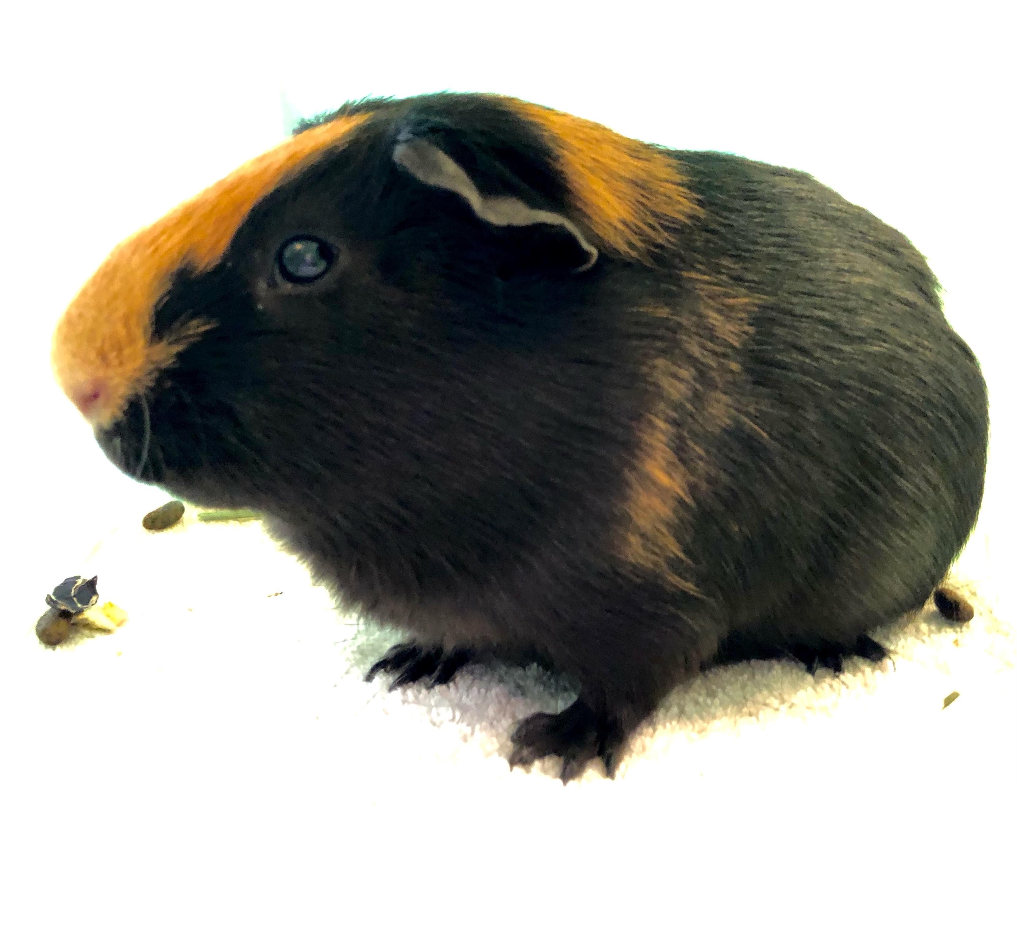 WICC Pet of The Week