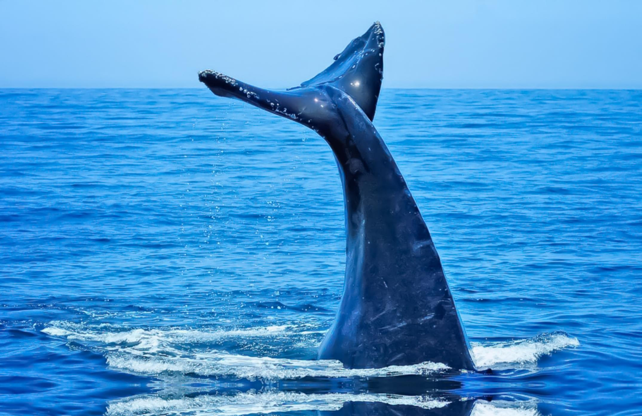 Melissa in the Morning: Speaking Whale