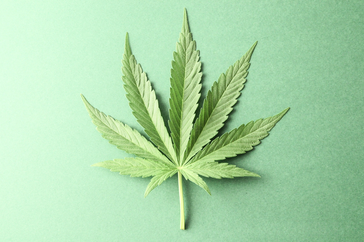 Melissa in the Morning: Designated Pot Areas