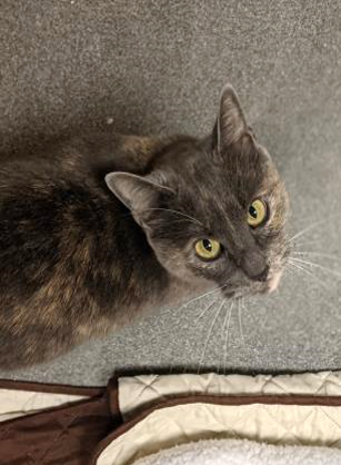 LillyMay CT Humane