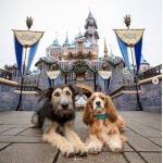 Disney+ Is Here!!!!