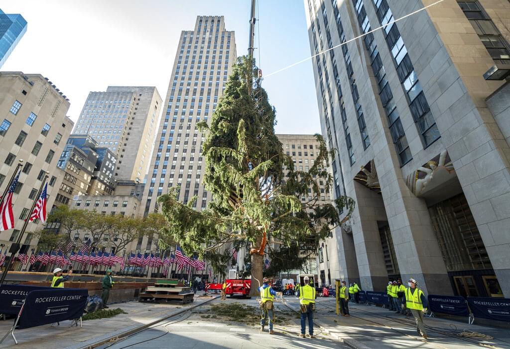 Owl in Rockefeller Center Christmas tree