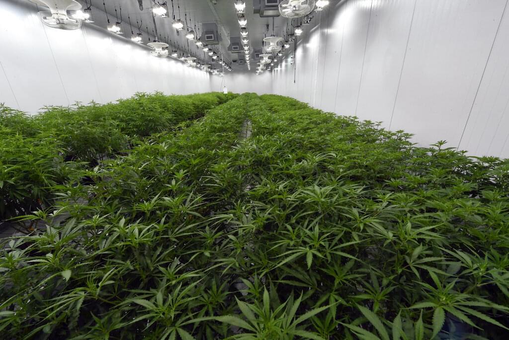 New York to legalize recreational marijuana