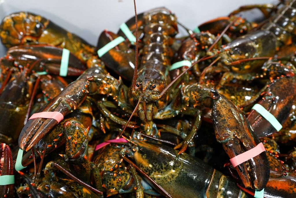 New rules coming for lobster fishing