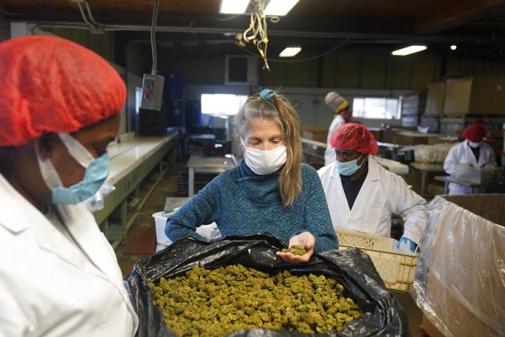 Marijuana New York Farmers