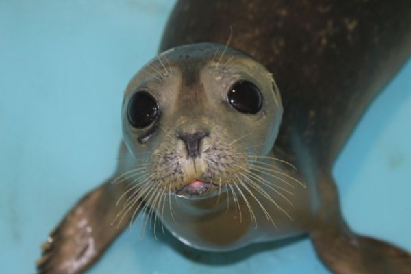 Seals named Joan Jett & Billy Joel to be released today back into the ocean