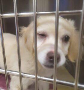 Nassau SPCA Sick dog