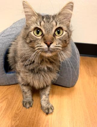 Pets of the Week 10-31-19