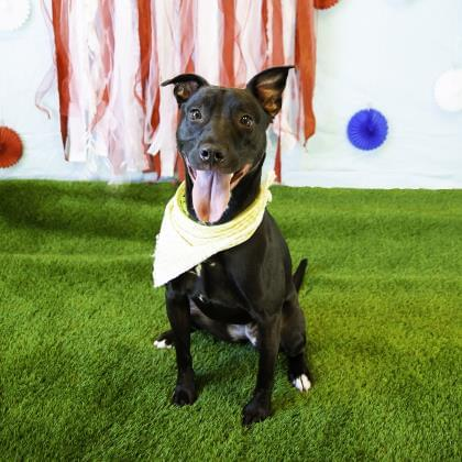 Pets of the Week 11/7/19