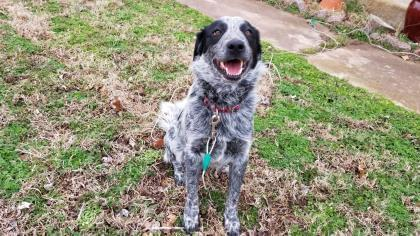 Pets of the Week 12-12-19