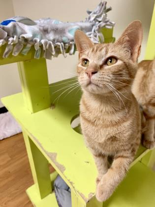 Pets of the Week 2-13-20