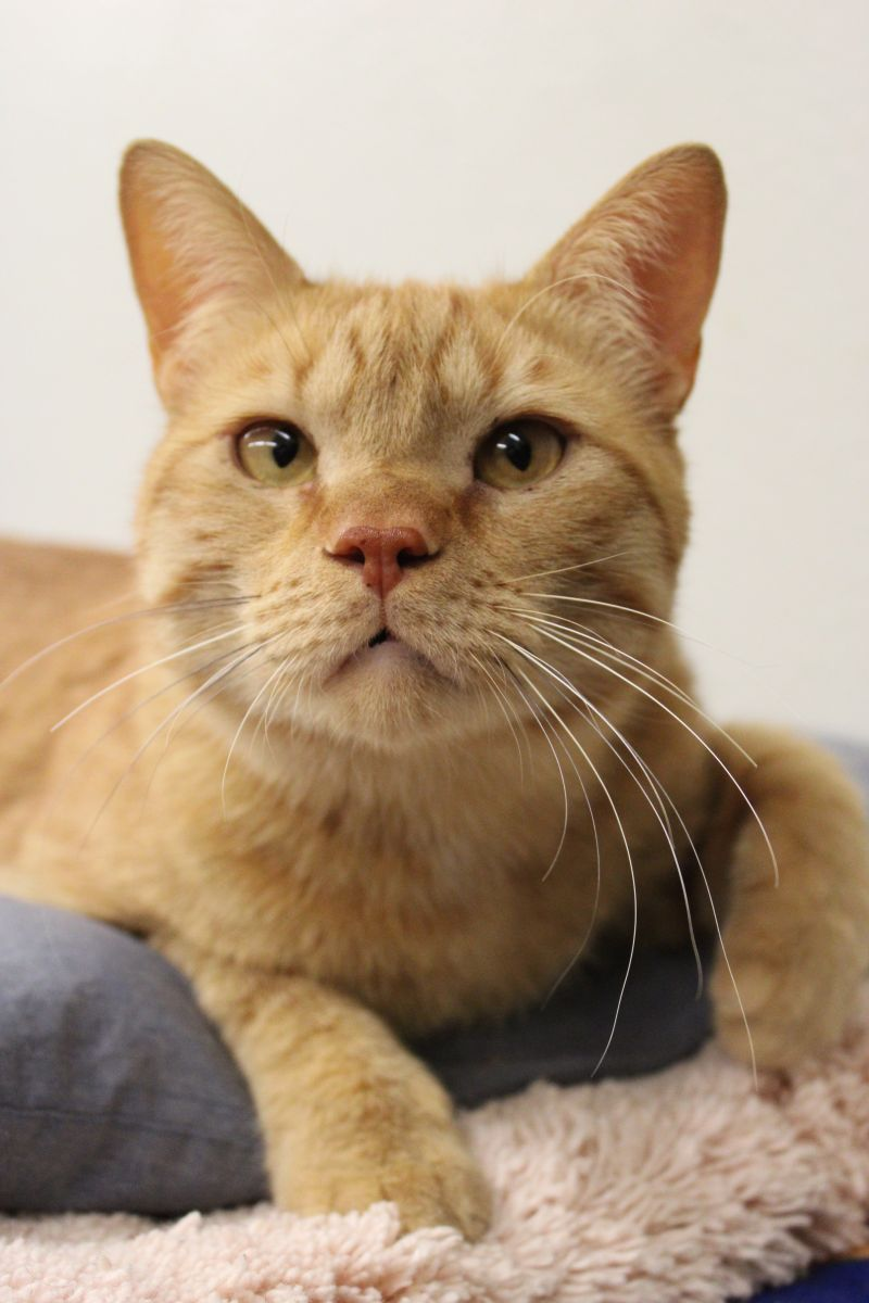Pets of the Week 7-1-21