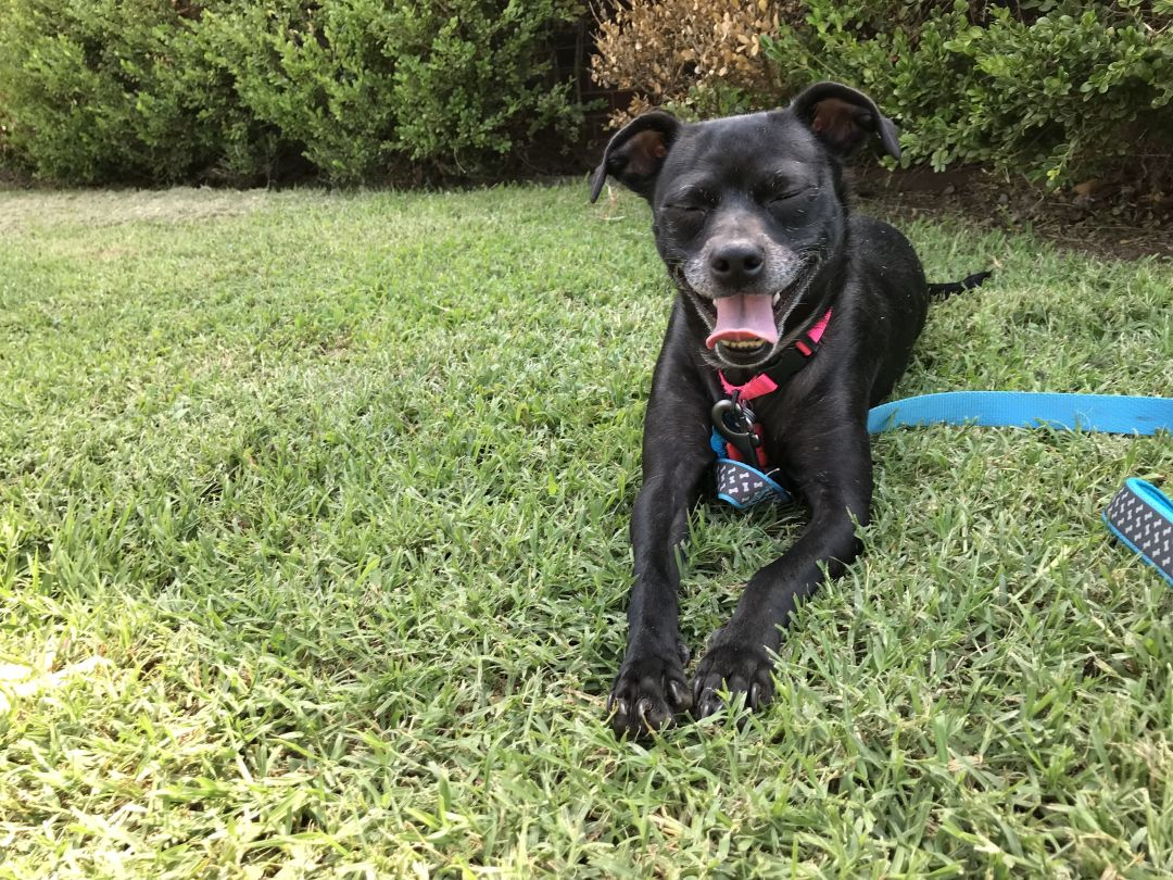 Pets Of The Week8-12-21