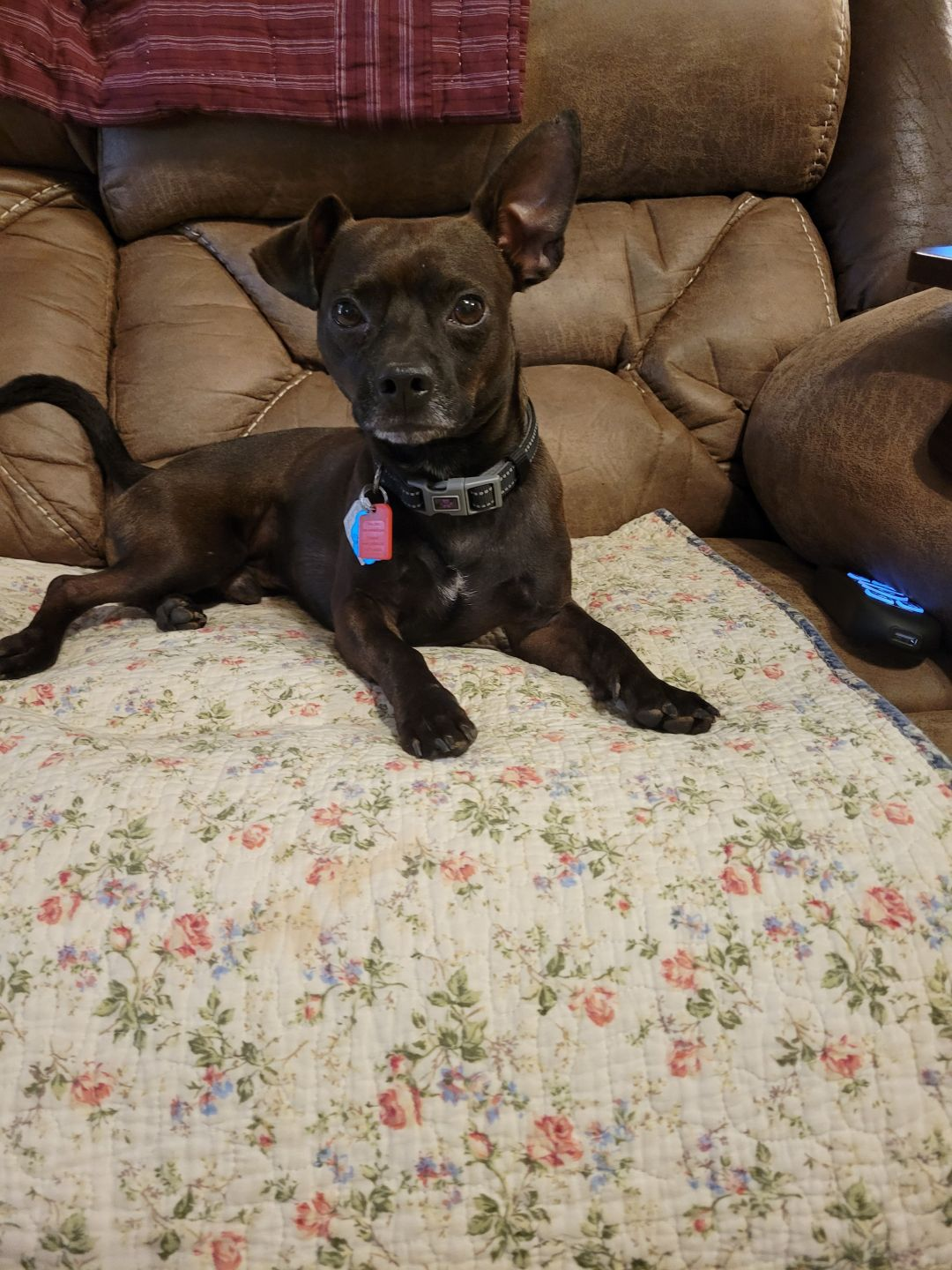 Pets Of The Week 8-26-21