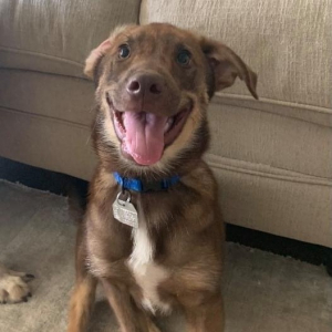 Pets Of The Week 9-23-21
