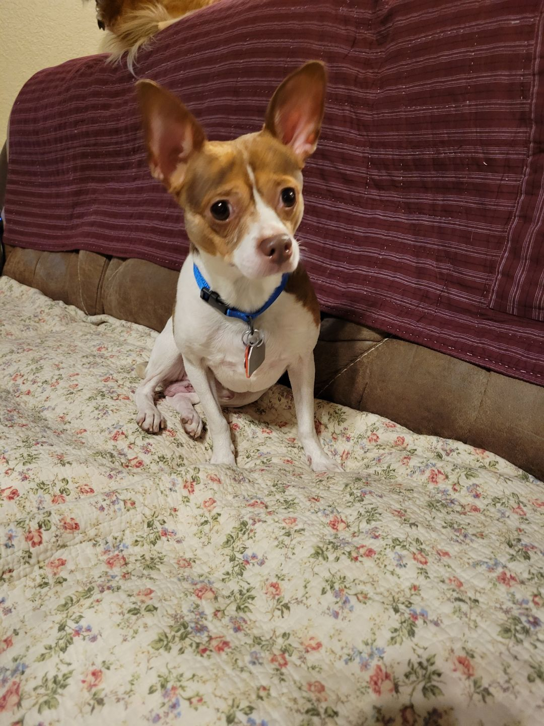 Pets Of The Week 10-7-21