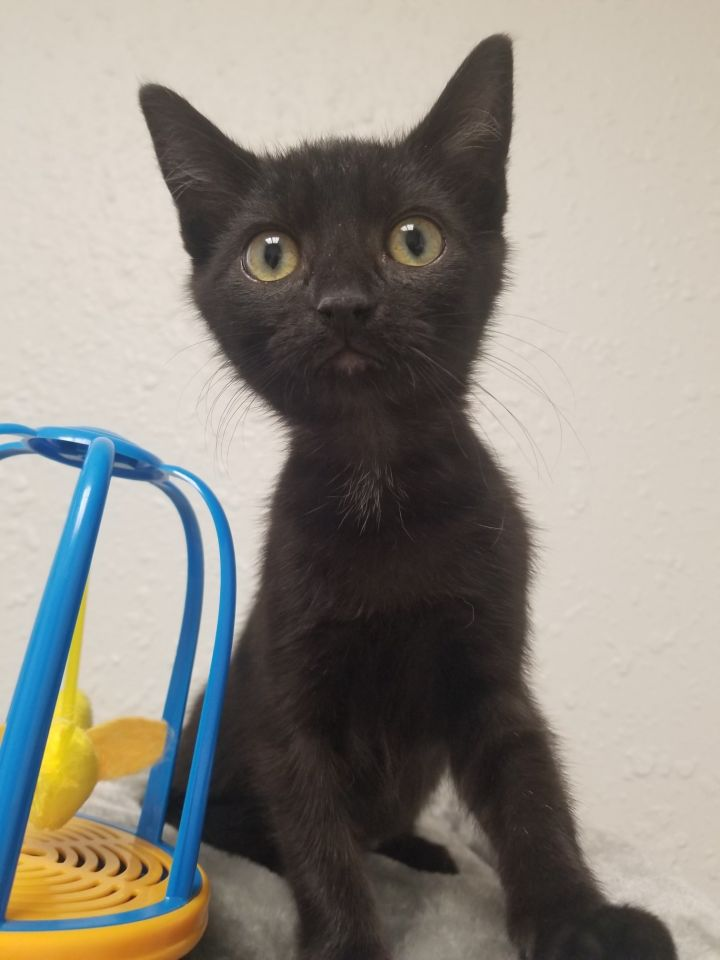Pets Of The Week 10-21-21