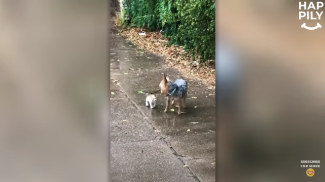 A Dog Rescued A Stray Kitten In The Pouring Rain