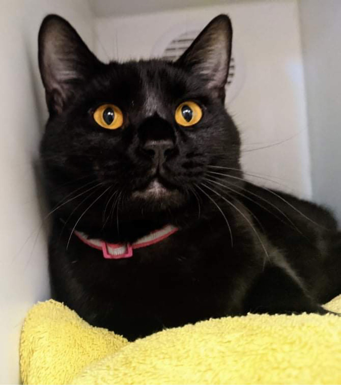 Pet of the Week provided by Ventura County Animal Services