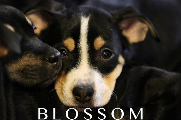 Rockin Paws: Meet Blossom