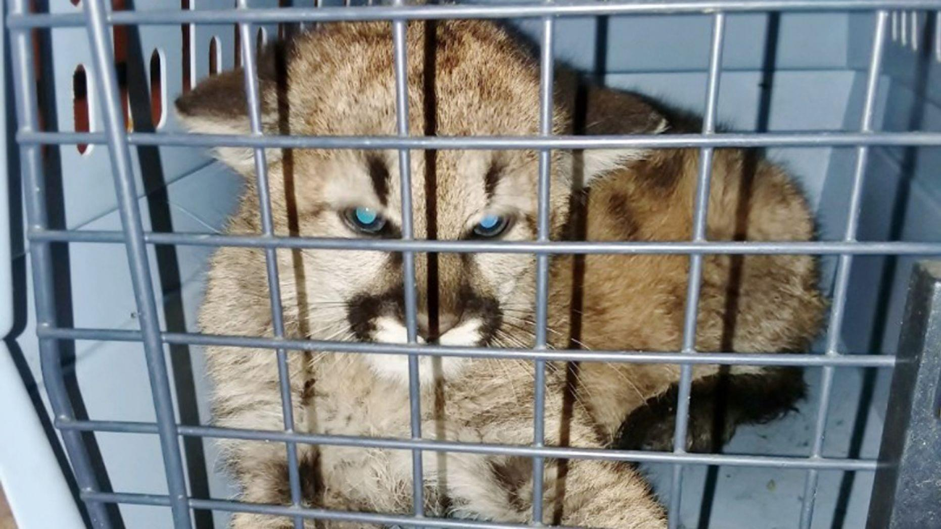 School Principal Arrested At Strip Club On Field Trip & Neighbors Capture Lion Cub, Feed It Brats